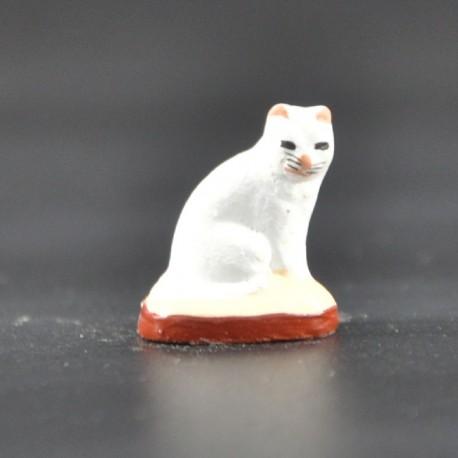 Chat petit blanc