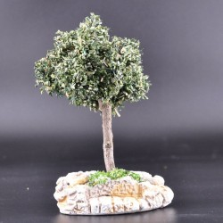 Arbre petit olivier